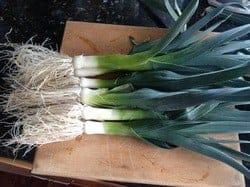 Grow Healthy Leeks