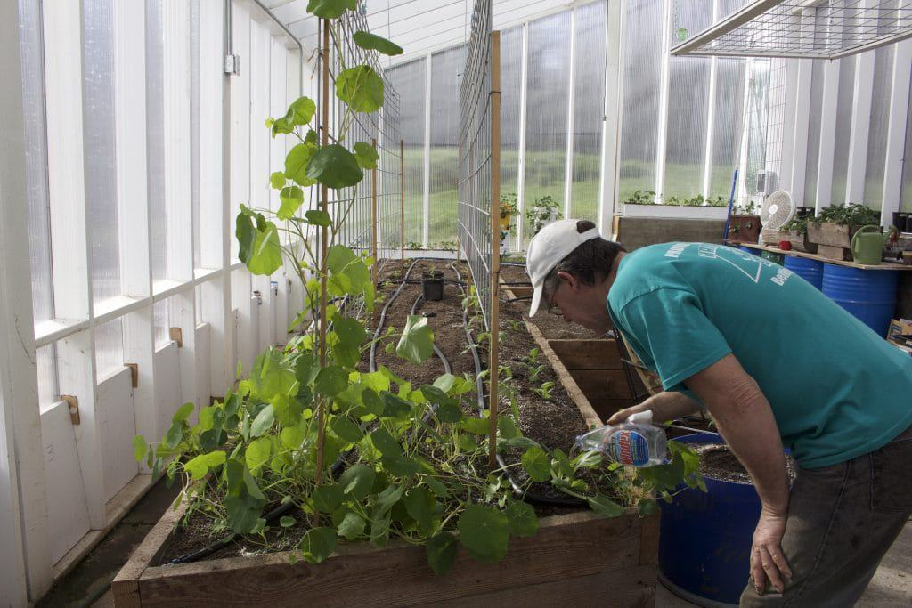 Dave in the Greenhouse