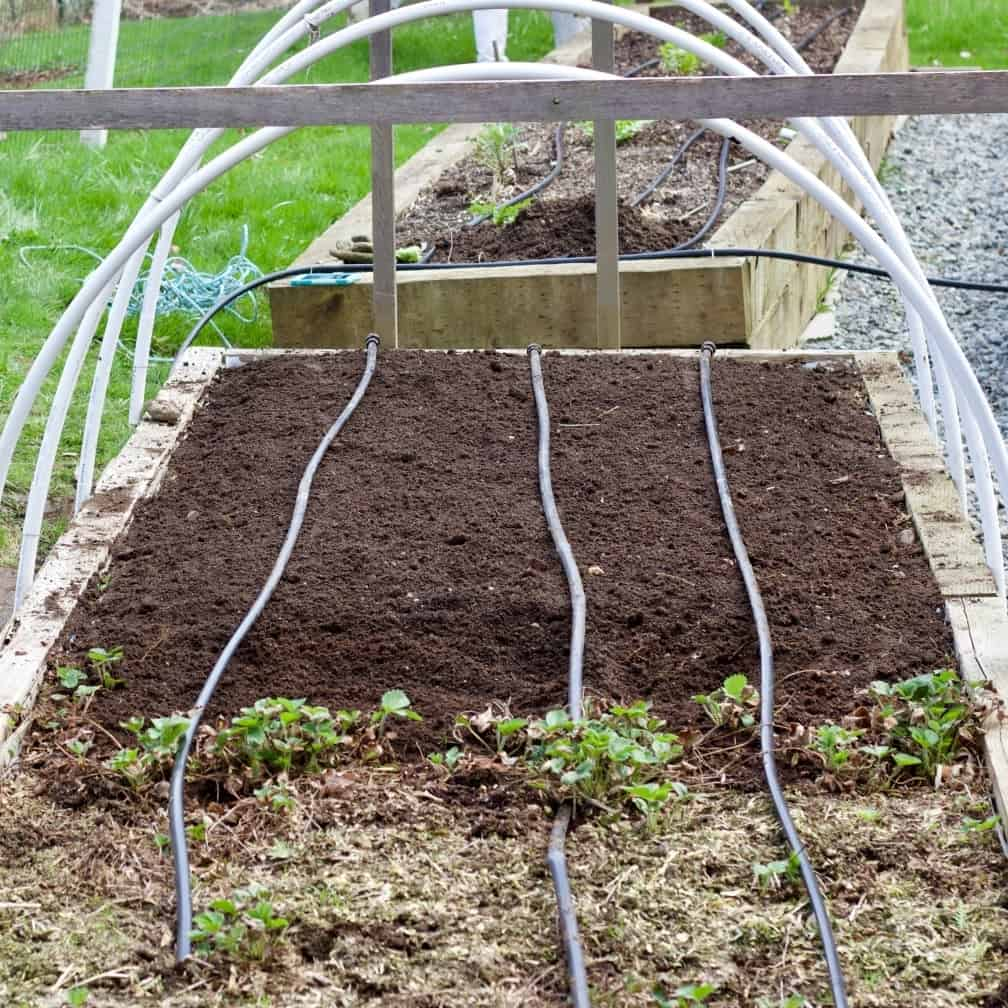 Garden bed for asparagus. Plant asparagus