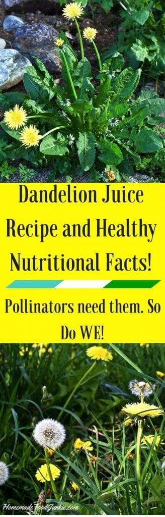 Dandelions benefit Pollinators need them. So Do WE! http://HomemadeFoodJunkie.com
