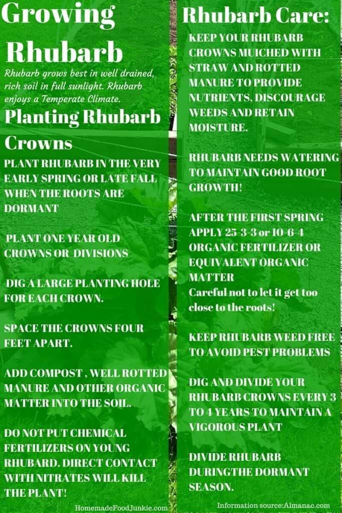 Growing Rhubarb In Your Garden Http://Homemadefoodjunkie.com