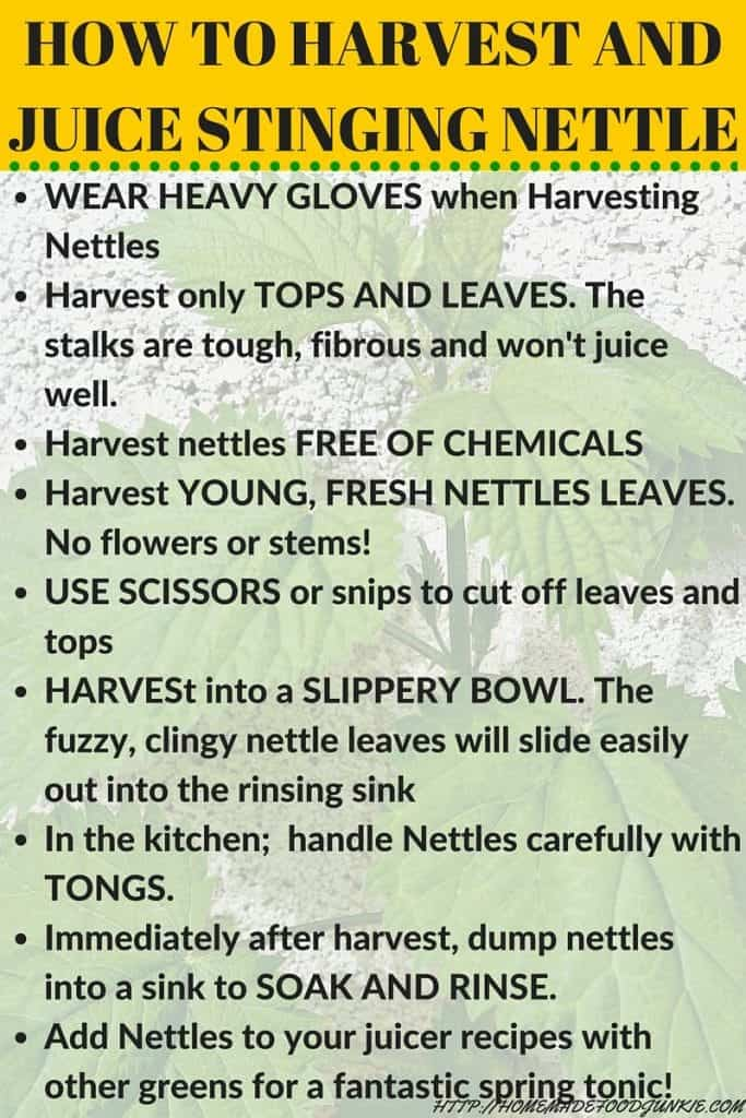 How to Harvest and Juice Stinging Nettles http://HomemadeFoodjunkie.com