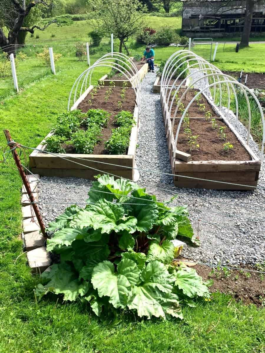 Garden Plot Location and other tips to help beginner gardeners #gardenplot #gardenocation #gardentips