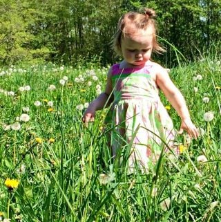 Dandelions Benefit Pollinators and People!