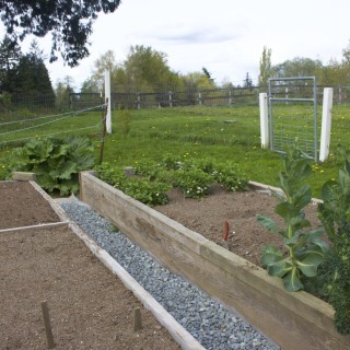 raised beds with a graveled walk between