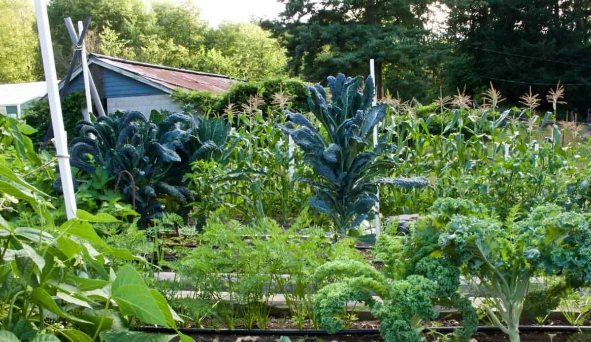 Organic garden 2015 http://Homemadefoodjunkie.com
