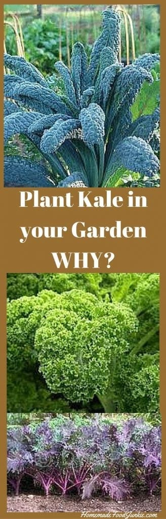 Plant Kale in your Garden. Here's why you want to grow it and EAT it!