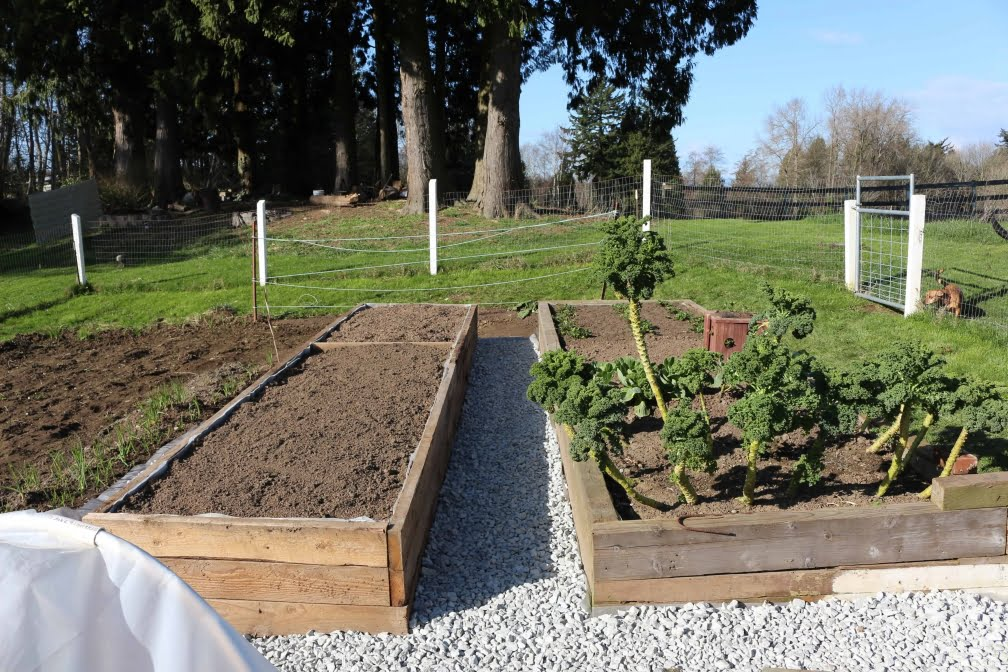 pretty raised slope garden vegetables ve building bed elegant of a able tiered on