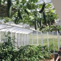Greenhouse in June 2014