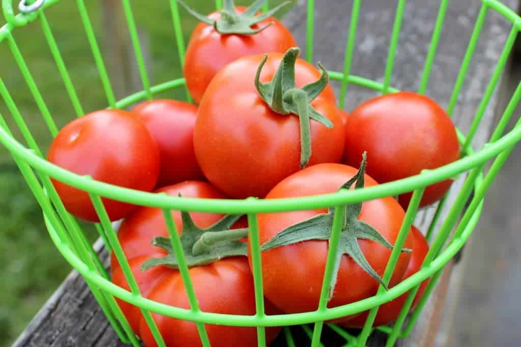 Greenhouse Tomatoes 2014