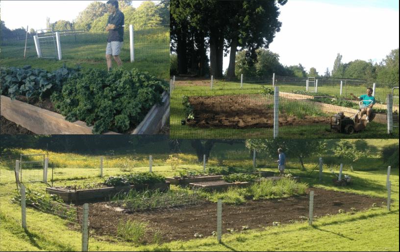 Our garden 2014