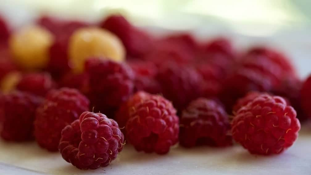 Fresh Raspberries