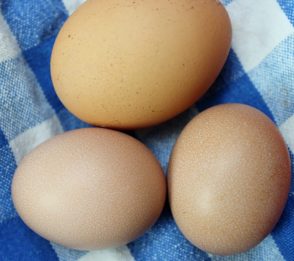 Baby chicken eggs