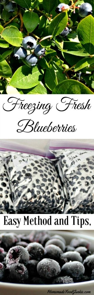 Freezing Blueberries process