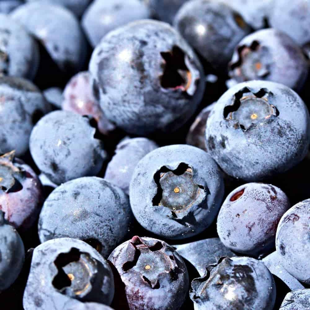 Fresh Blueberries for Blueberry Zucchini Bread