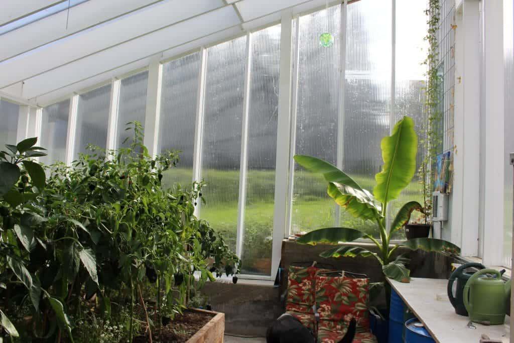 Pepper Plants October 2014