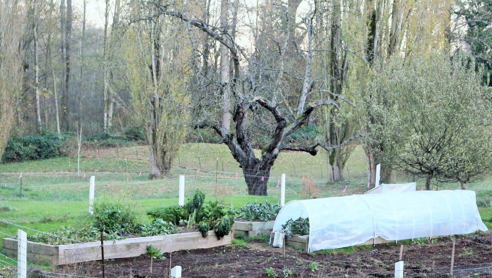 Winter Hoop Garden