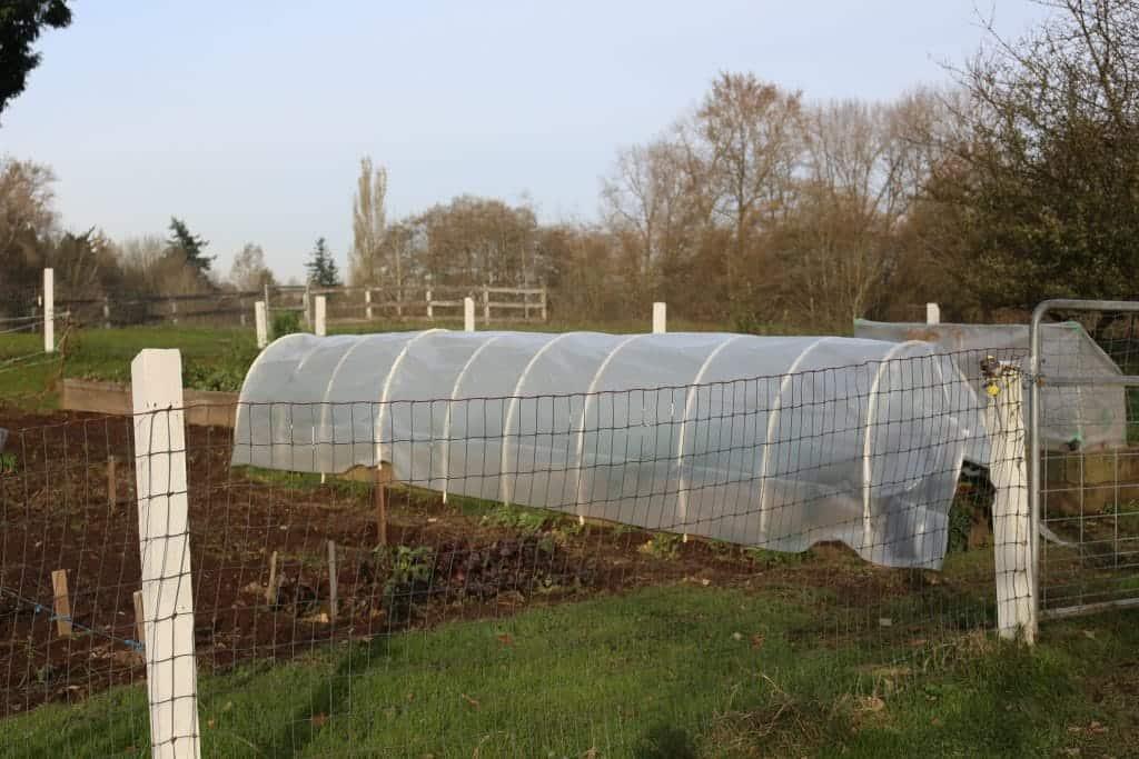 Winter Hoop Gardening