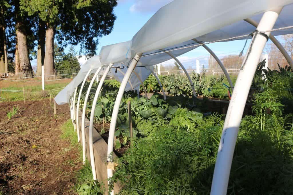 Hoop Gardening. outdoor garden recap 2014
