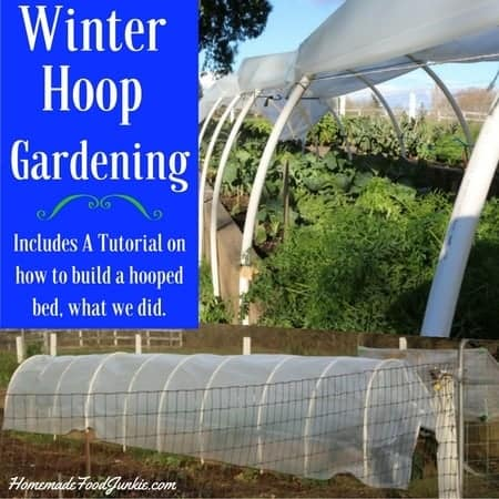 Winter Hoop Gardening