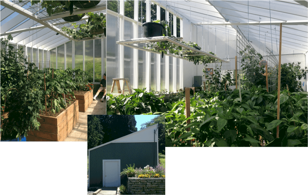 Our greenhouse with double paneled hog wire tomato trellis and other trellis ideas. http://HomemadeFoodjunkie.com