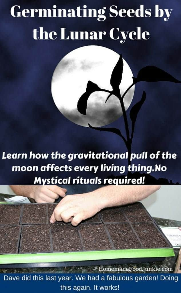 Germinating Seeds by the Lunar Cycle http://homemadefoodjunkie.com