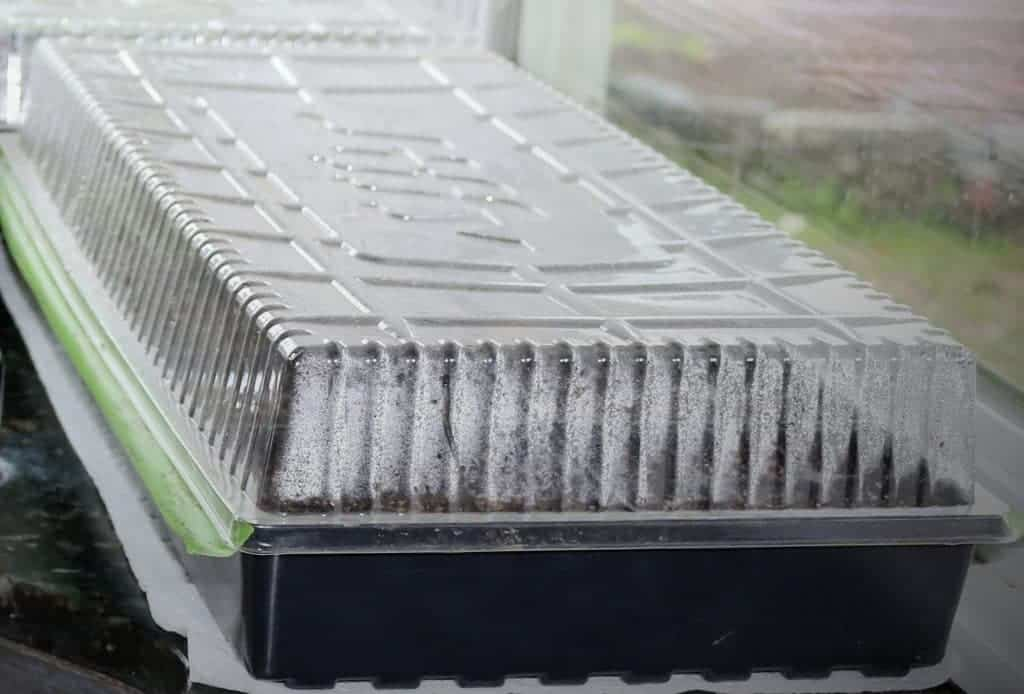 seed starting tray Germinating seeds by lunar cycle. http://homemadefoodjunkie.com