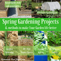 Spring Gardening Projects