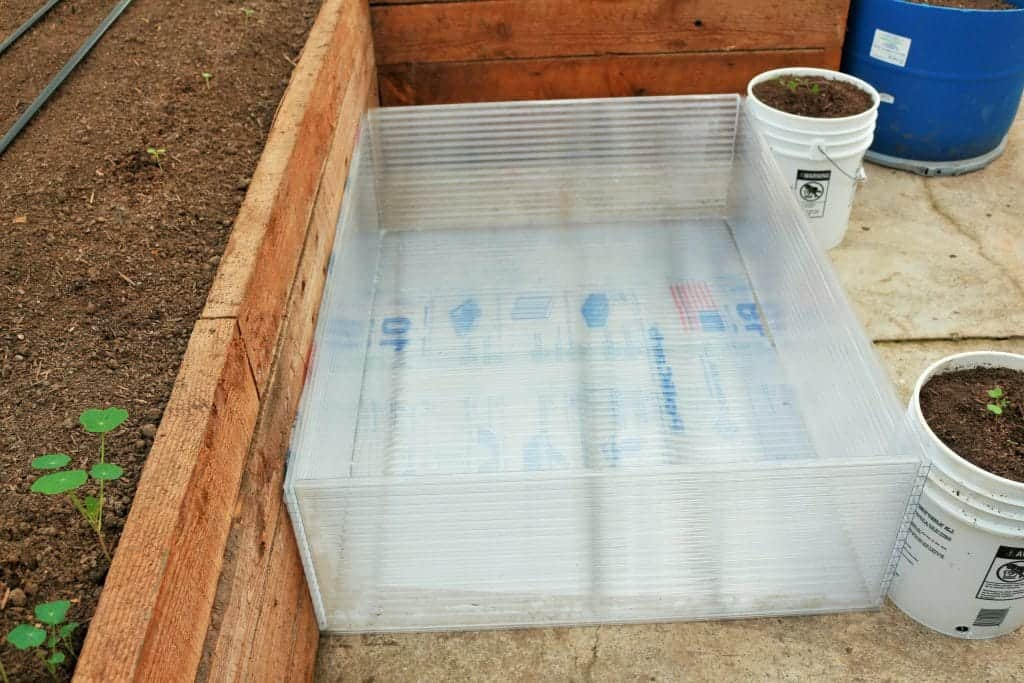 making a cold frame, making cold frames for seedlings