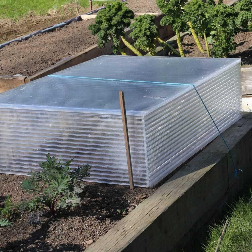 building cold frames for seedlings