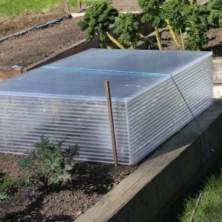 building cold frames for seedlings