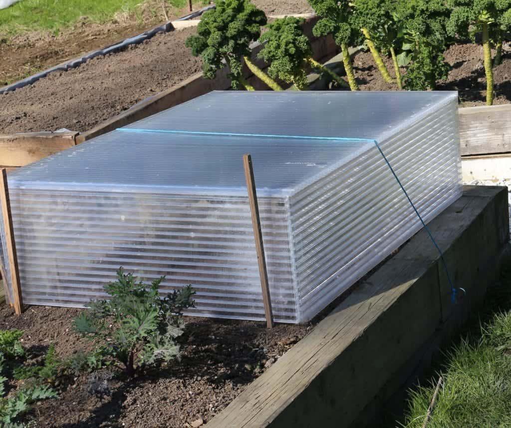 Building A Cold Frame, Making Cold Frames For Seedlings