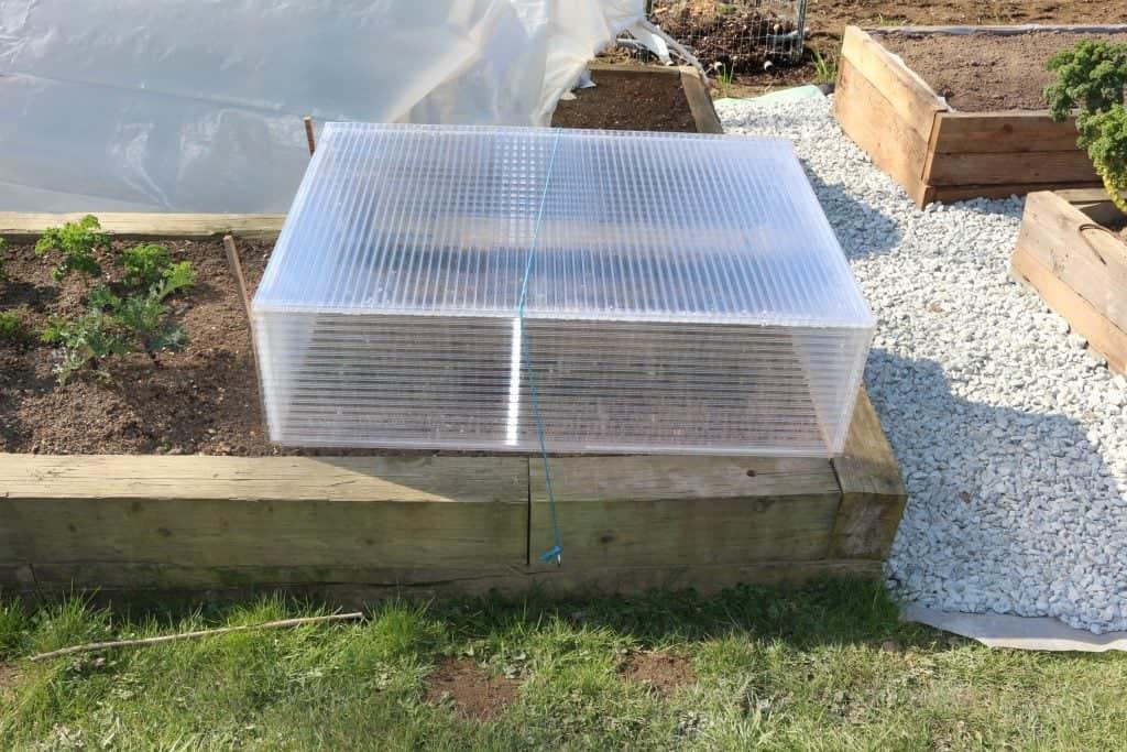Greenhouse cold frame, making cold frames for seedlings,