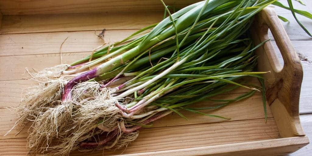 garlic shallots