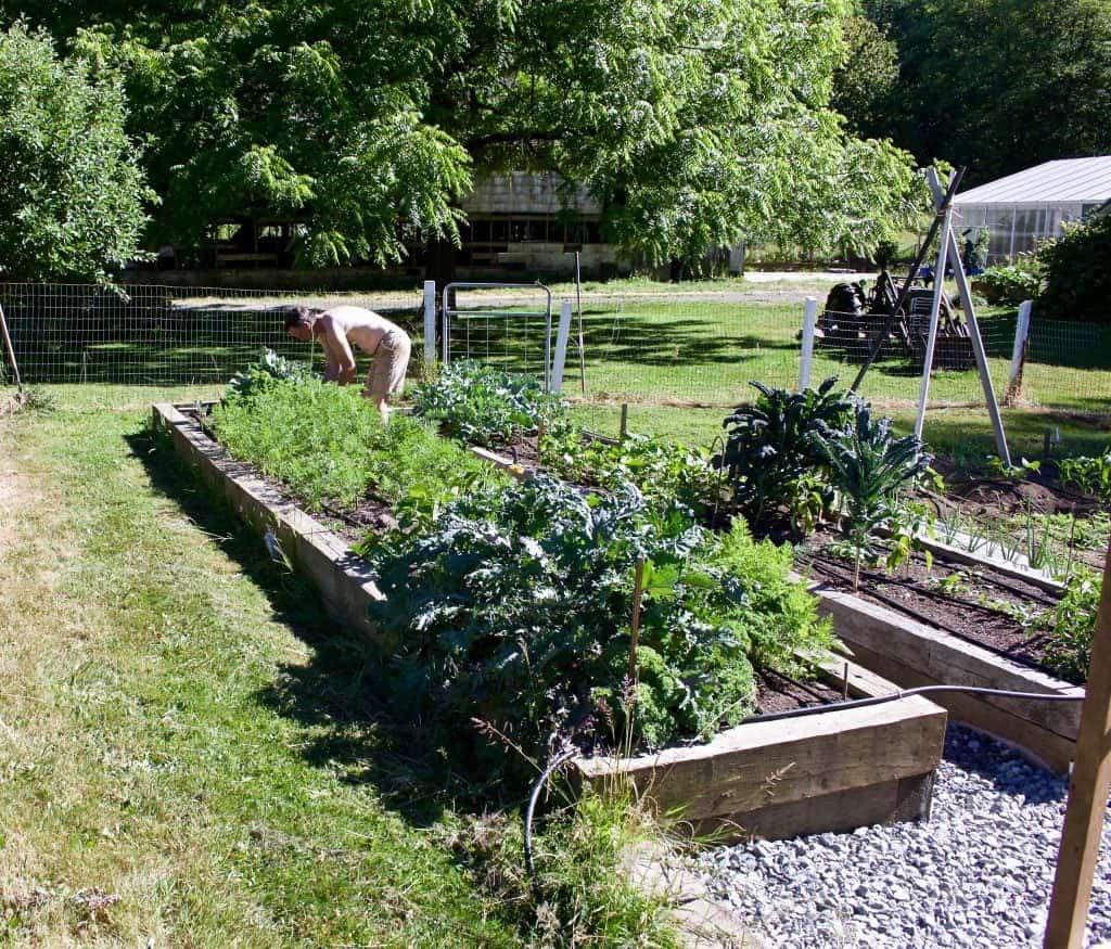 Garden 2015