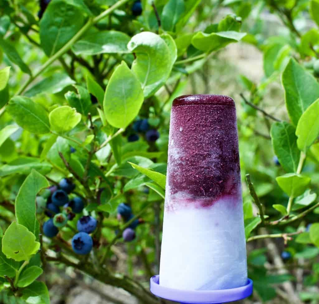 Blueberry Coconut Lime Pops