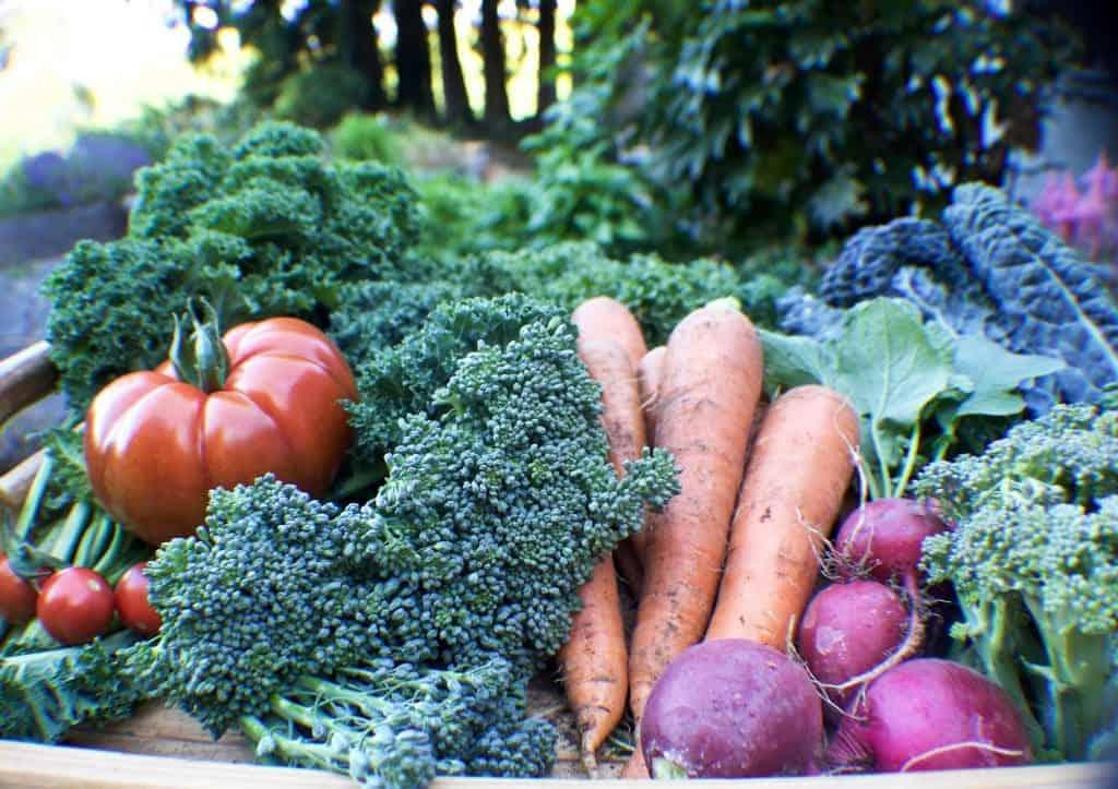 garden produce 2015