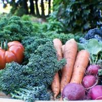 garden produce for juicing
