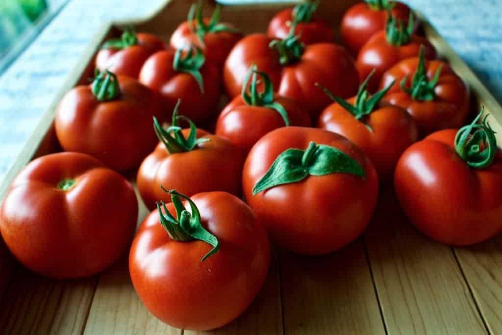 tomato harvet 2015