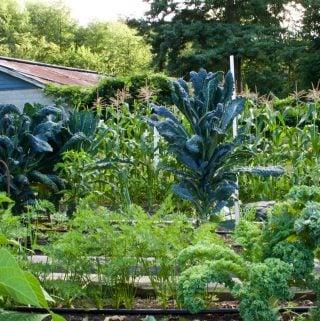 Our Garden 2015