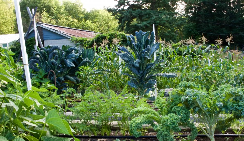 Homemade Food Junkie Garden 2015