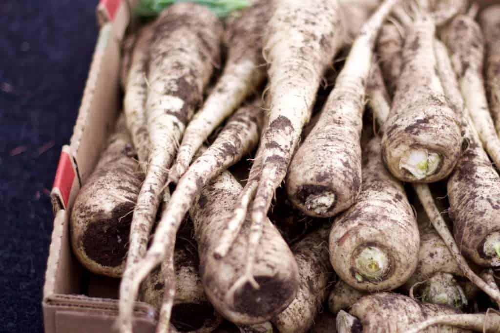 Grow Parsnips through the winter in warm climates. They frosts intensify their sweet flavor