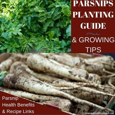 GROW PARSNIPS