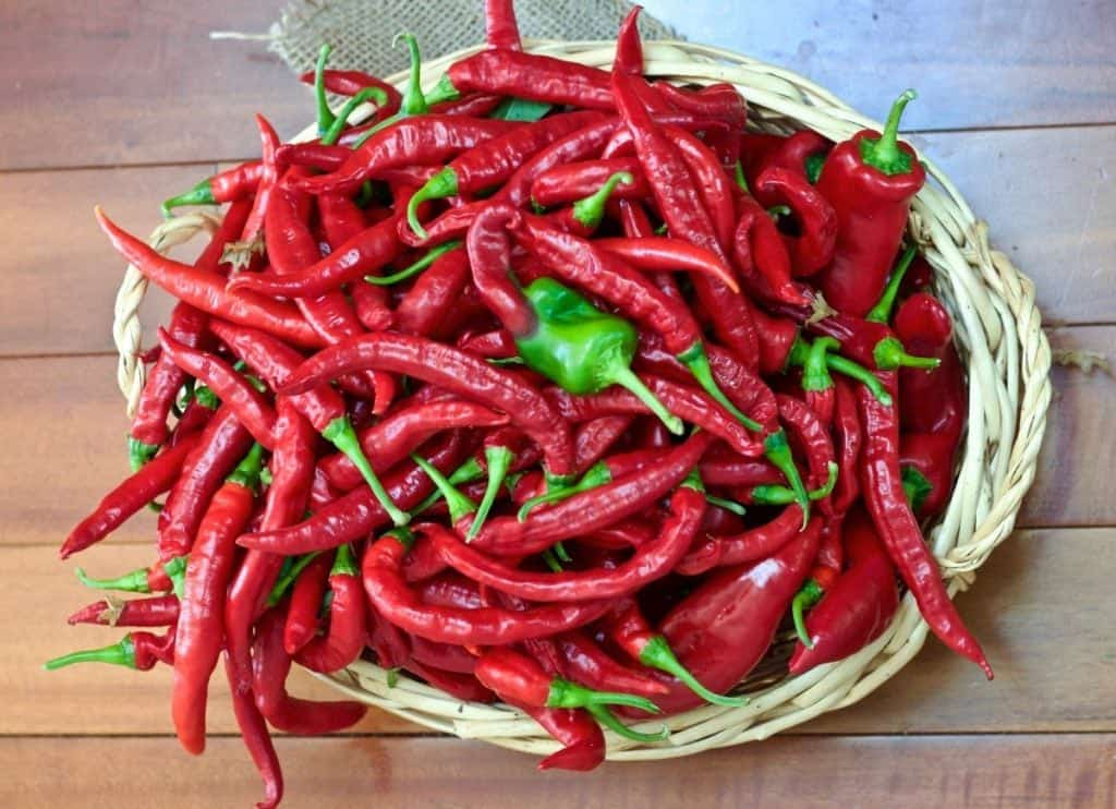 Bangkok Peppers are perfect for Thai recipes 5 tips for growing perfect peppers http://homemadefoodjunkie.com
