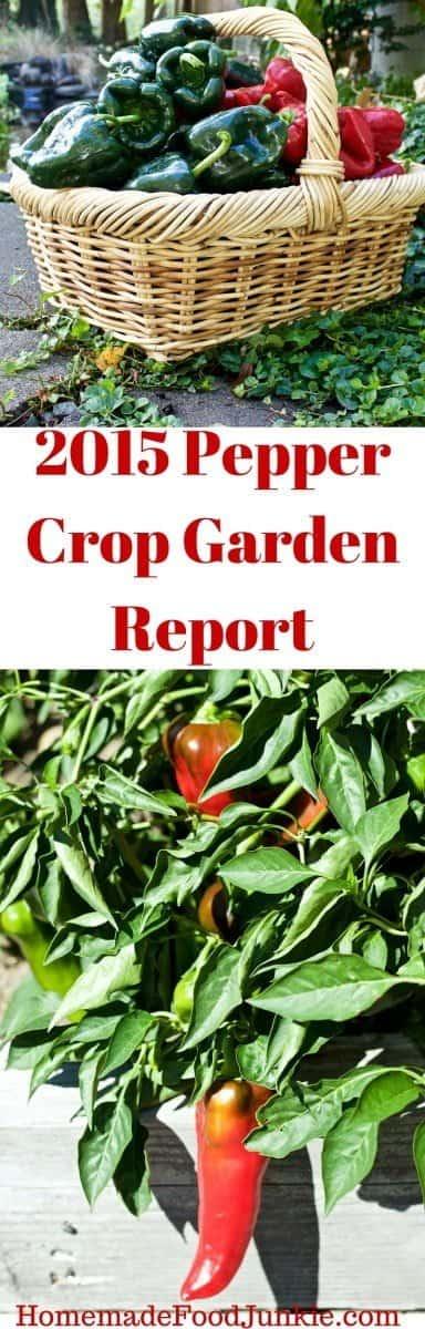 2015 Pepper crop report http://HomemadeFoodJunkie.com