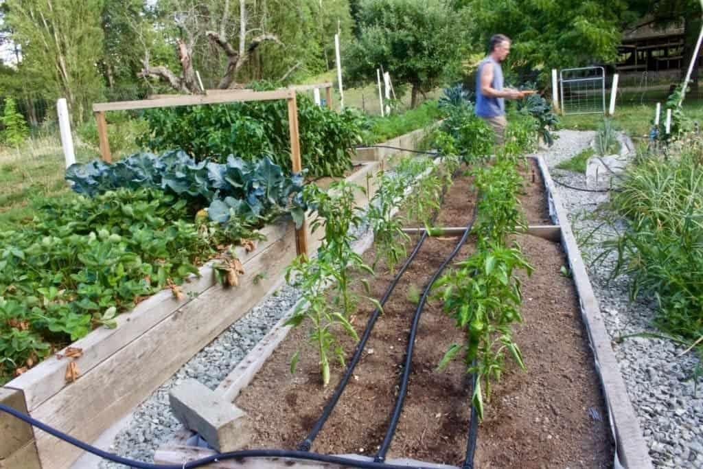 Garden plot Location considerations