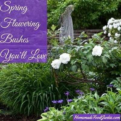 Spring Flowering Bushes You'll Love