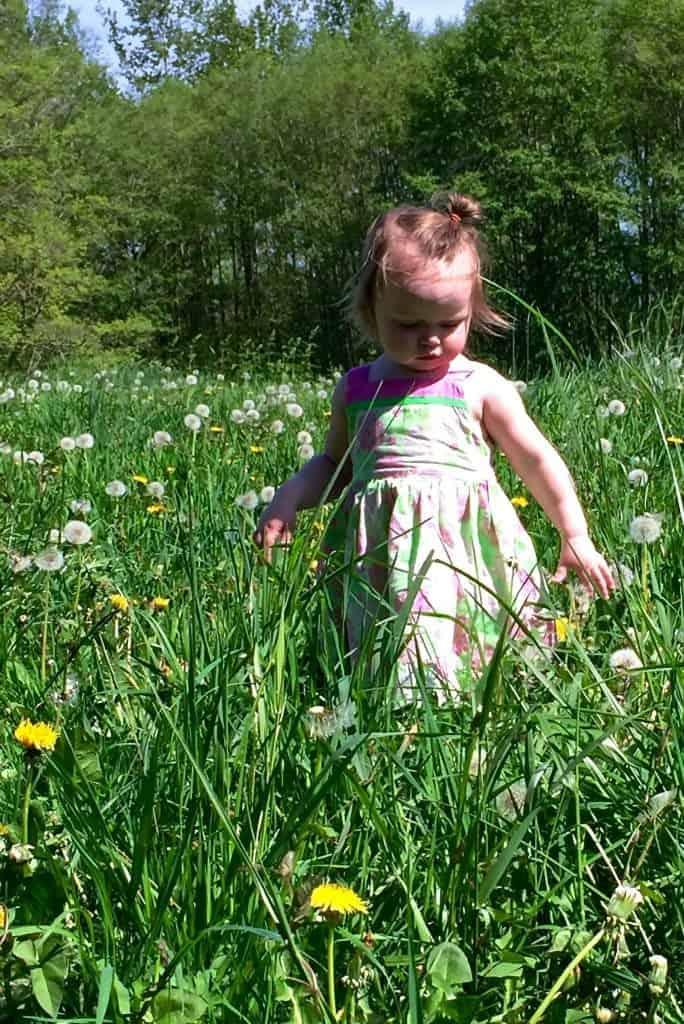 Dandelion benefits us and pollinators. Kids love them!