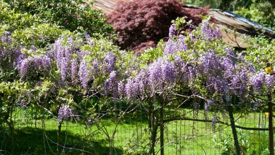 Spring Flowering Bushes Youll Love Homemade Food Junkie
