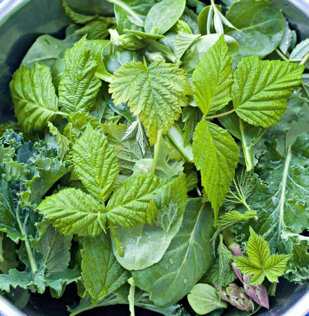 Stinging Nettles and juicing greens